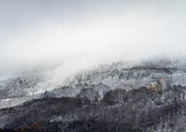 forest_mist_winter-wallpaper-1280x800 (1)